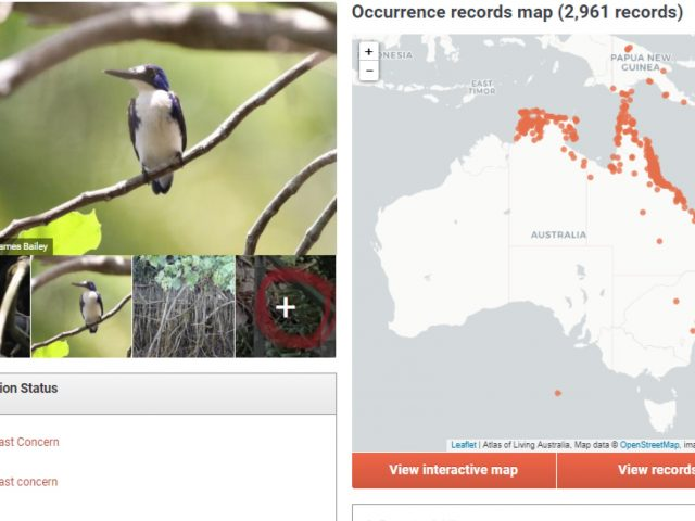 Search the ALA for species information and images