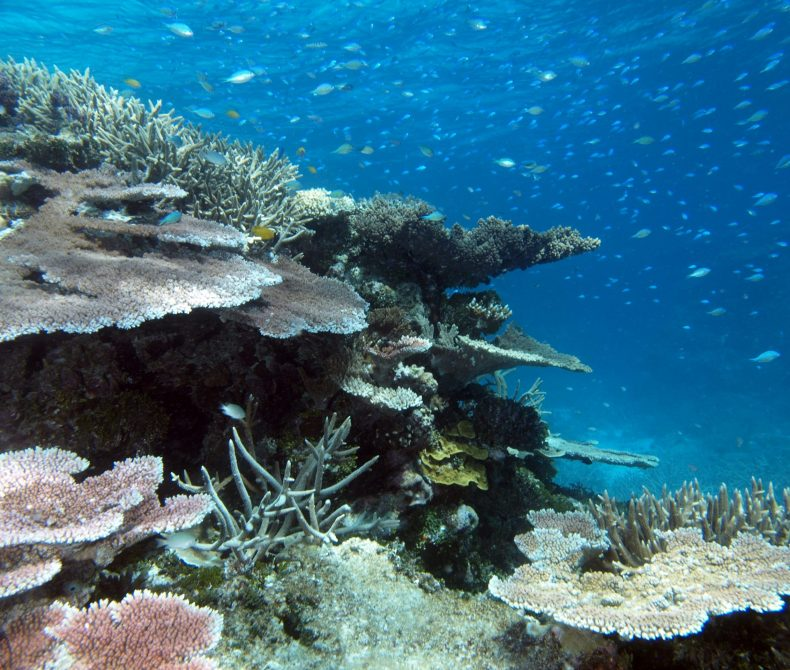 Underwater view of Wheeler Reef