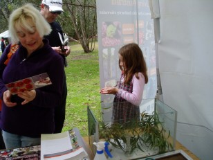 ANBG Open Day 2010 - Looking at the postcard & holding the stick insect