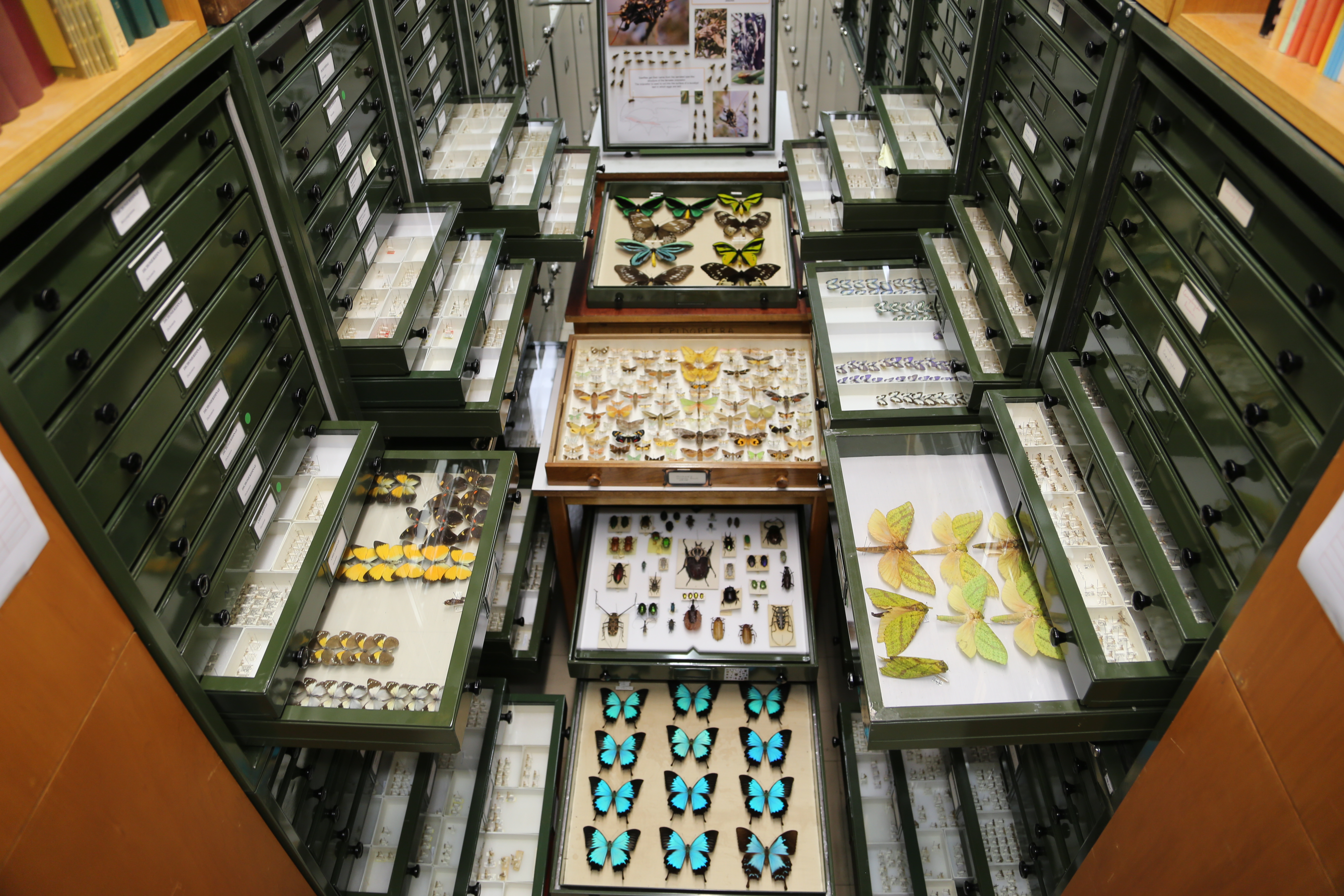 There are over 34 million biological specimens in Australia's museums. To date about 20 per cent has been databased, and work continues to unlock the data associated with these invaluable collections. Copyright: Australian National Insect Collection.