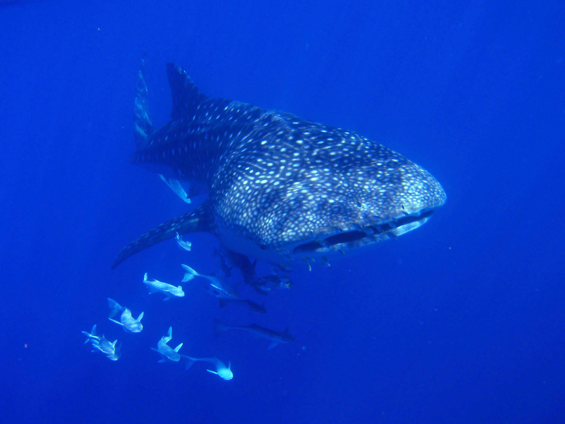Image: Join the world's biggest fish race around the world
