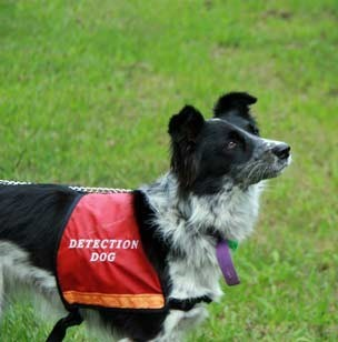 Image: ALA in use: Research dogs helping to record data on threatened species