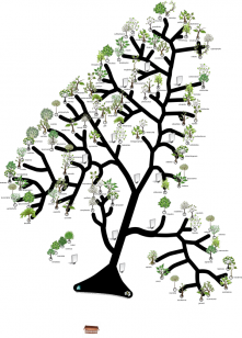 Tree of Trees layout diagram (press to see high resolution image 3MB)