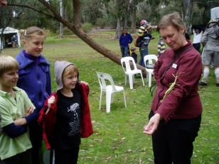 ANBG Open Day 2010 - Annette showing kids the stick insect