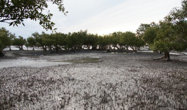 Cape Keraudren mangroves