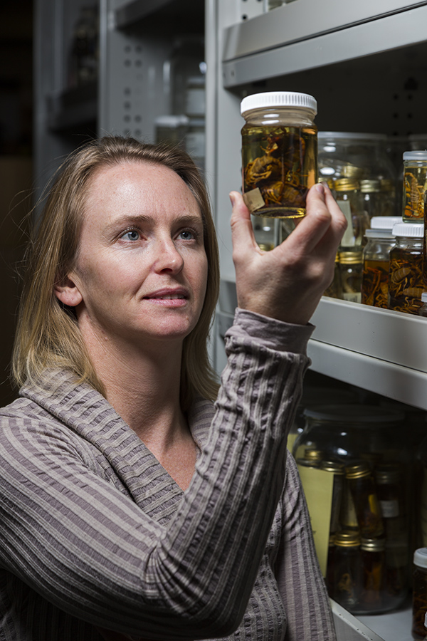 Collections Manager Kate Sparks with scorpion specimens. Photo by Denis Smith, courtesy South Australian Museum.