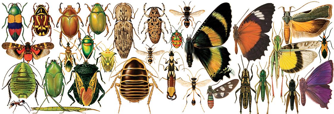 Insect Illustration ANIC