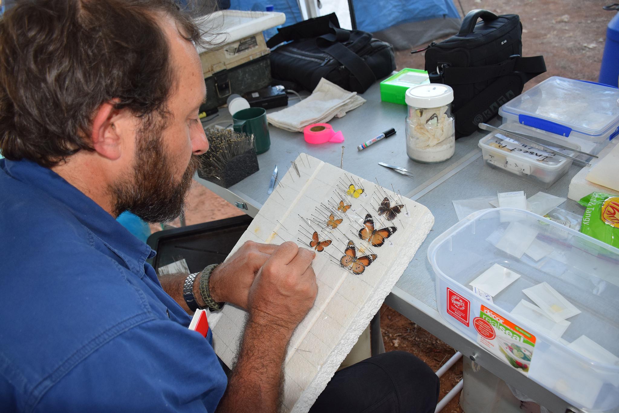 Jared Archibald pinning butterflies