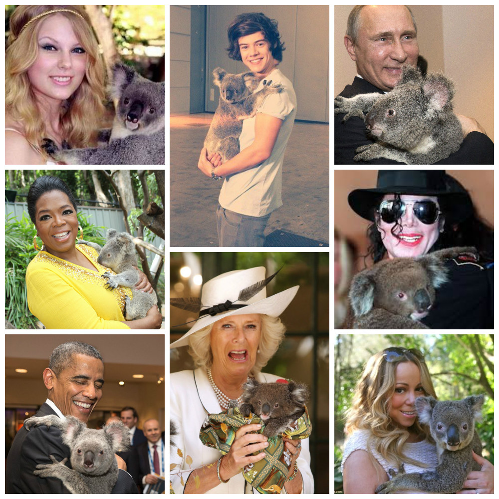 T-Swizzle, Oprah, Obama, Camilla, Harry Styles, Putin, MJ, and Mariah... Celebrities and dignitaries always ensure they get a Koala cuddle when visiting. (Images via Buzzfeed)