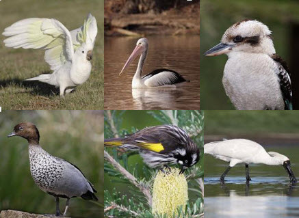 Selected bird images