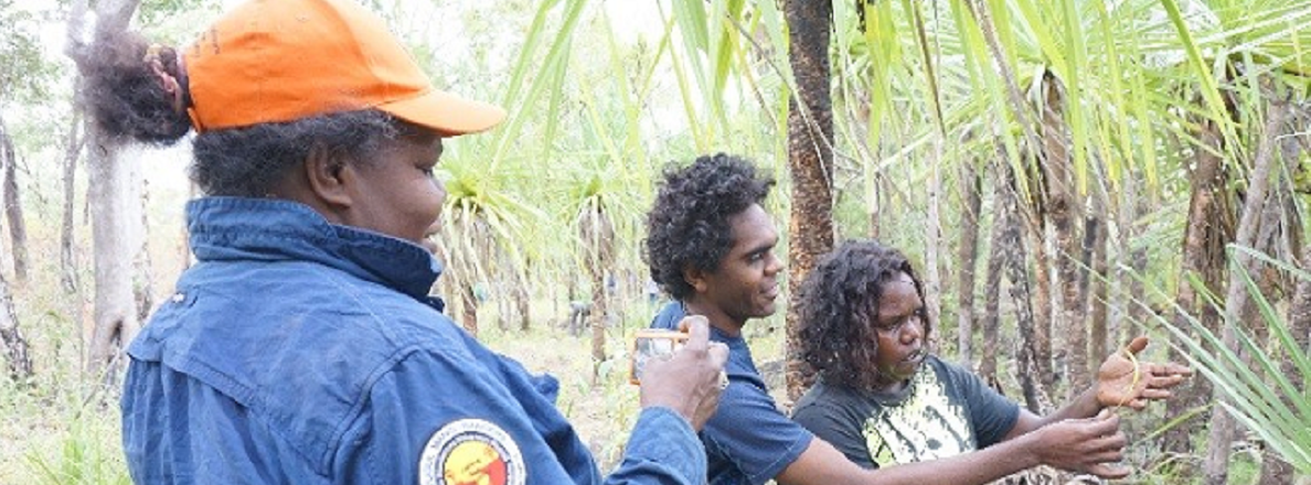 Image: Sharing Indigenous women's knowledge of biodiversity and culture across tribal boundaries in Arnhem Land