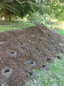 An image of a sloped site with holes dug for plants to be planted in
