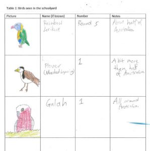 An image of a student's schoolwork with a table containing drawings of birds they saw with names, numbers and notes about the bird